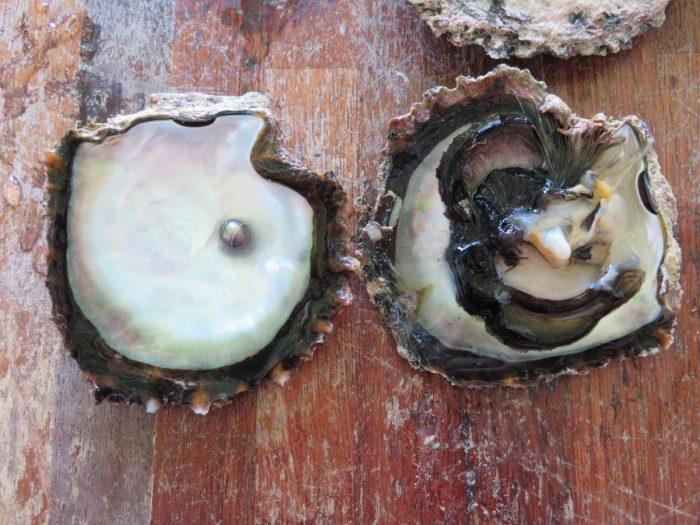 Parel, rechtstreeks uit oester
