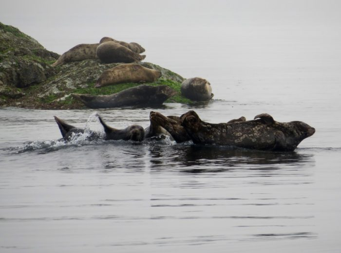 zeeleeuwen in canada