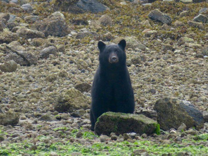 beer bij Tofino