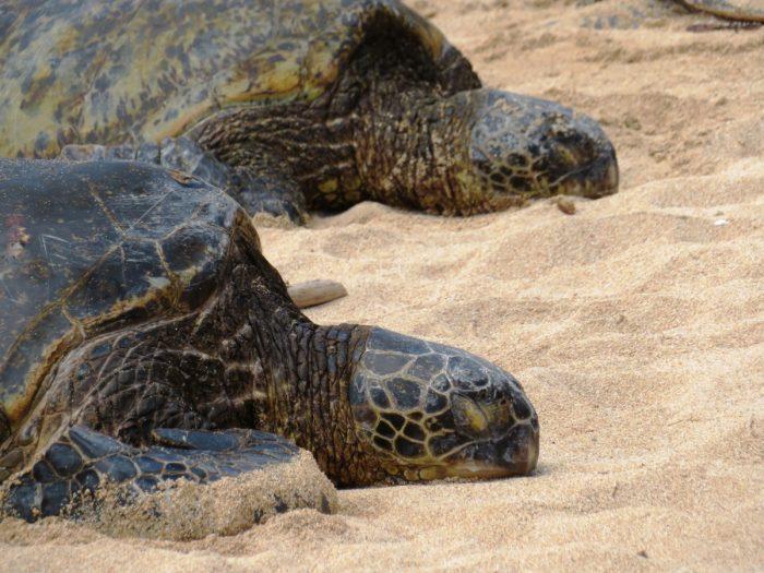 schildpadden close-up