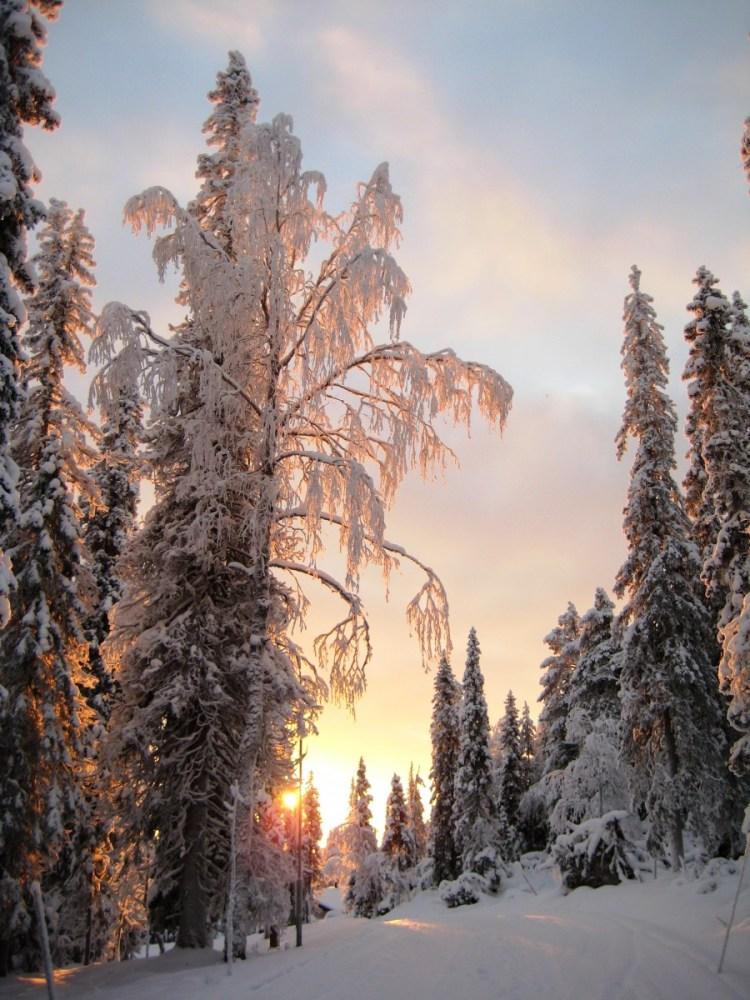lapland in winter