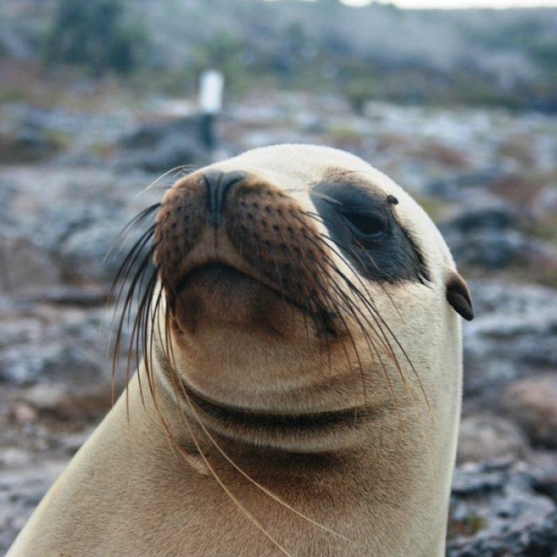 zeeleeuw Galapagos Eilanden