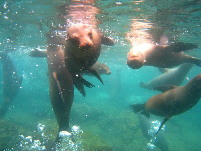 snorkelen met zeeleeuwen Galapagos Eilanden