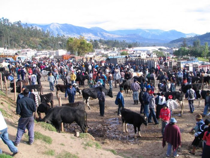 dierenmarkt Otavalo