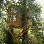 The Allure of the Treehouse