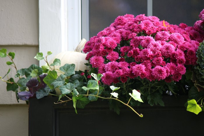 Close up of window box 2