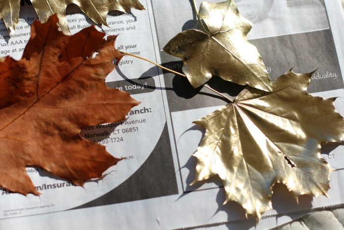 Leaves before and after