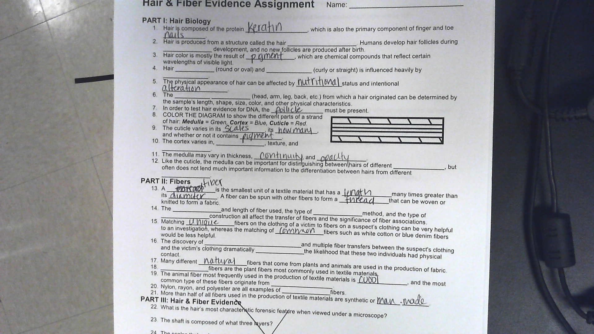 Hair Fiber Evidence Worksheet Answers
