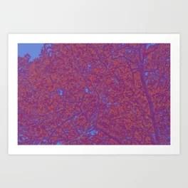 Quirky Quercus Art Print