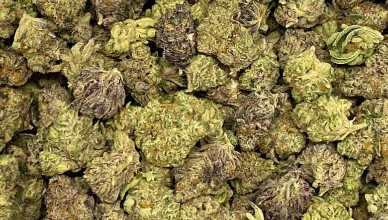 Cannabis buds (CTNewsJunkie / photo)