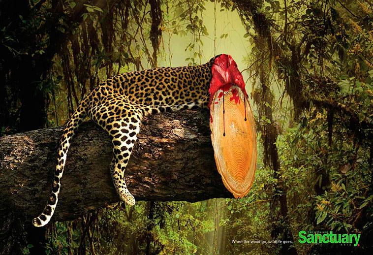 Resultado de imagen para deforestación en japón