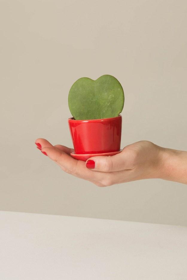 Heart Shaped Plants