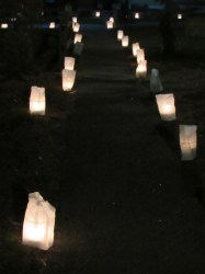 FOLLOW THE LUMINARIA