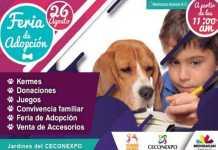 Feria de adopcion