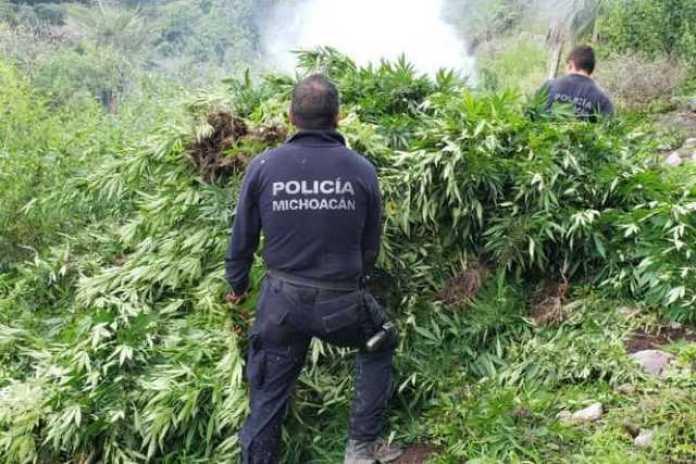 plantio marihuana Policia Michoacan