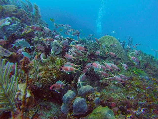 Playa el Salado junto a Cuba Blue Diving