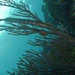 Buceo en Puerto Escondido