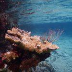 underwater in Punta Perdiz