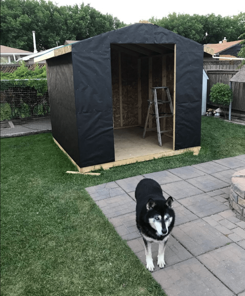 Diy Backyard Shed Cubicle Coma