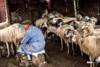 Reportage foto-progetto Lavori e Tradizioni https://cubographic.wordpress.com/works/fotografia/reportage/il-pastore-di-pecore-giuseppe-mirabile/