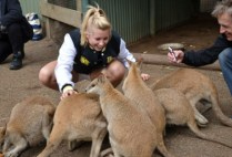 australia-sydney-by-kristin-ann-simboski-kangaroos-unsw-spring-2012