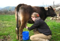 bhutan-bumthang-by-lindsey-weaver-yes-i-really-am-milking-this-cow-2006