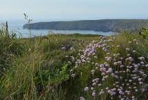 england-cornwall-by-hannah-farrar-cliffs-20141