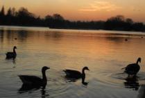 england-london-by-kelsey-lanning-birds-20121