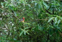 galapagosgs_by-elizabeth-angell-bird-in-canopy-2014-2015