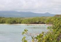 galapagosgs_by-kara-gordon-shoreline-2011
