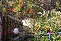 israel-tel-aviv-by-sarah-westmoreland-garden-2010