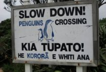 new-zealand-wellington-by-alex-oldham-penguin-sign-2011
