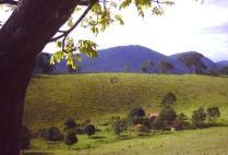 brazilgs_by-alexandra-hartmant-abiotic-pasture-2003