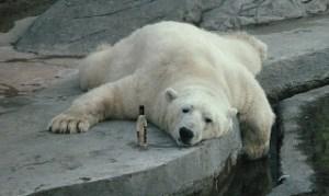 drunk_bear