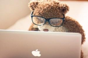 bear-at-computer