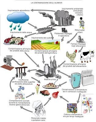 1contaminazione alimenti