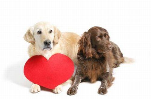 malattie-cardiache-animali-domestici