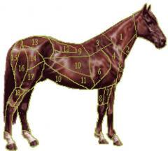 cavallo-tagli-217486_tn