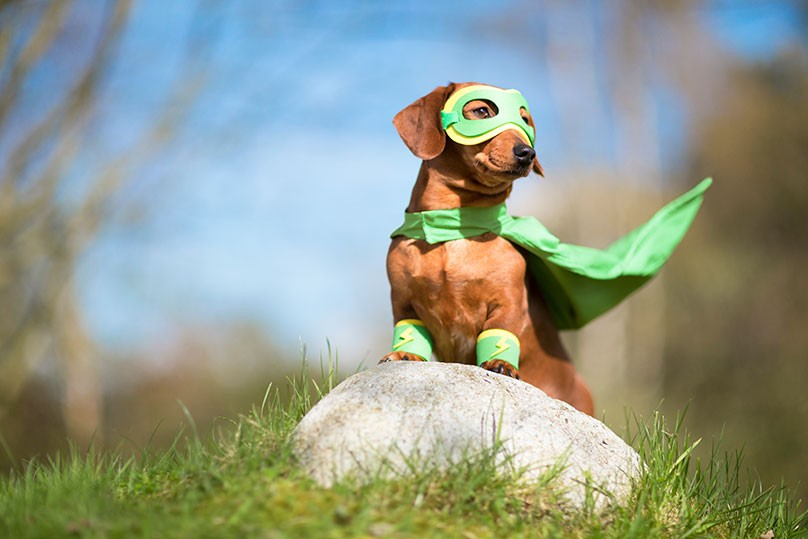 superhero-dog