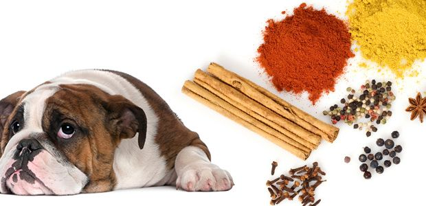 Herbs-and-Spices-for-Dogs