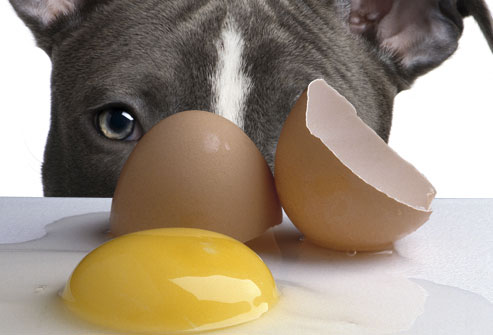 dog-eggs