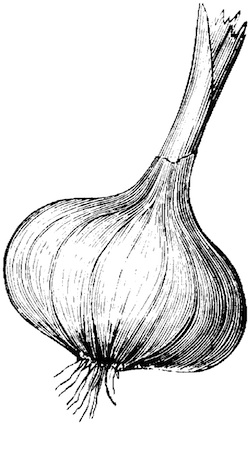 Final Garlic