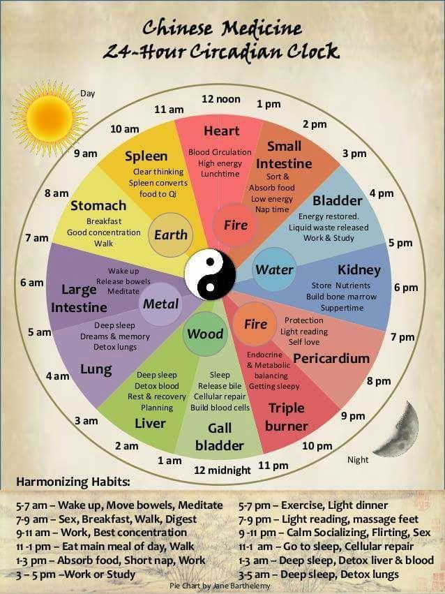 Il ciclo dell'energia, delle stagioni e delle ore del giorno con uno sguardo alla Medicina Tradizionale Cinese