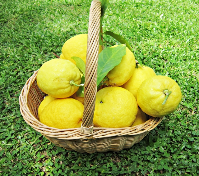 Marmellata di limoni. Occorrono limoni eccezionali, maturi e non trattati