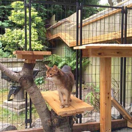 awesome large diy backyard cat