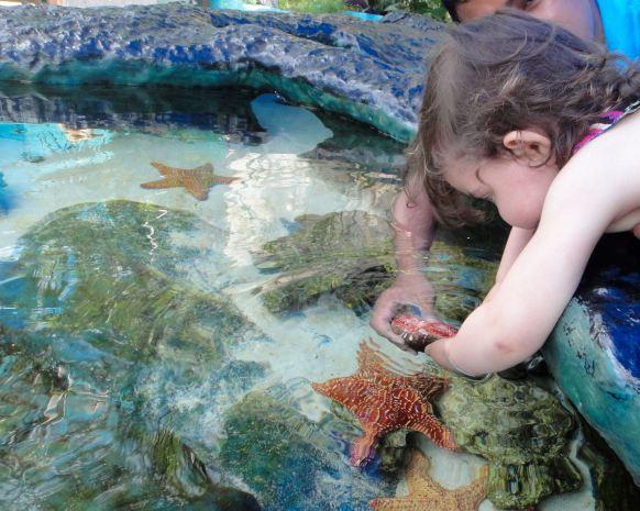 Starfish, Interactive Aquarium, Cancun.