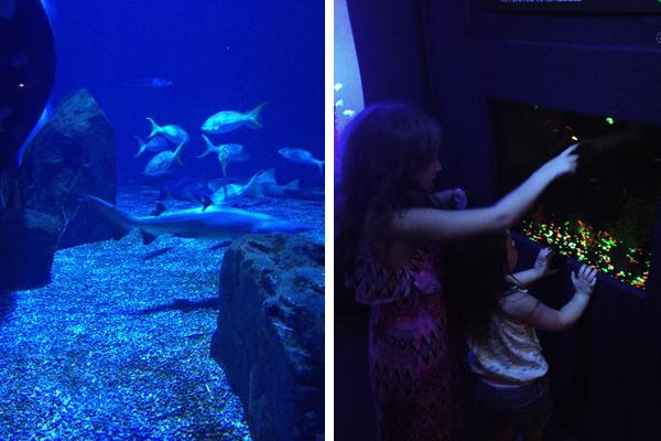 Mystic Aquarium indoor exhibits