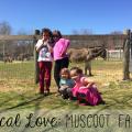 Local Love | Muscoot Farm: Katonah, NY