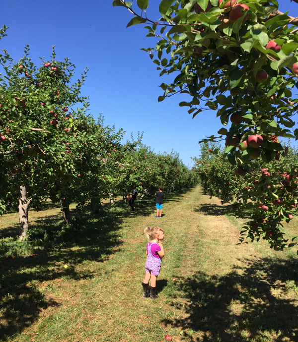 Pick your own fruits and veggies at Fishkill Farms