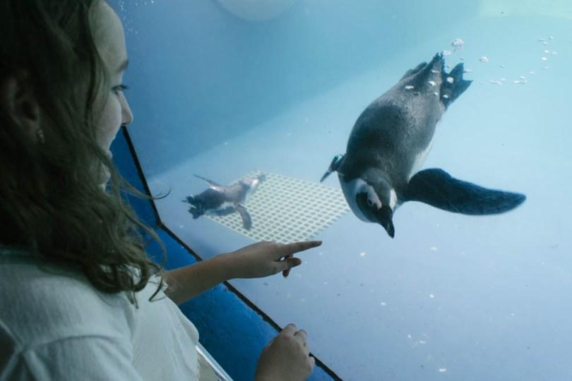 up close with the African penguins at Mystic Aquarium